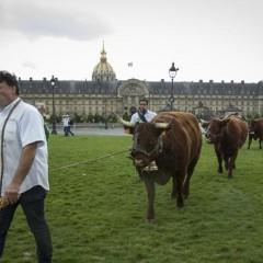 Les sociétés françaises n'ont plus d'actionnaires de référence