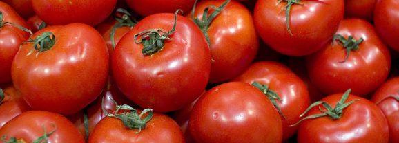Le marché de la tomate est un très mauvais exemple de fonctionnement de la mondialisation